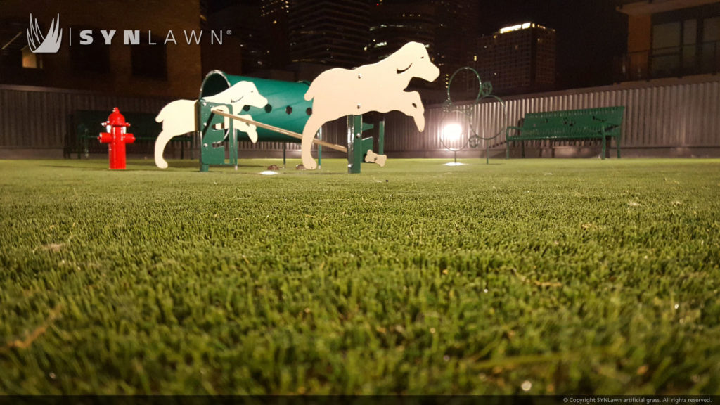 Dog park in the city with artificial turf grass