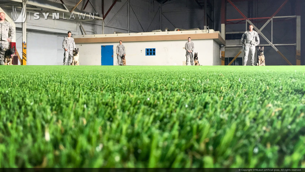 Artificial Turf at an Indoor Dog Training Facility