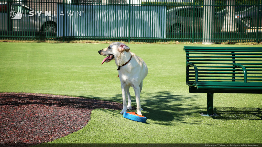Artificial Turf for Pets in City Park for Pets