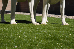 Pet safe artificial Turf Products