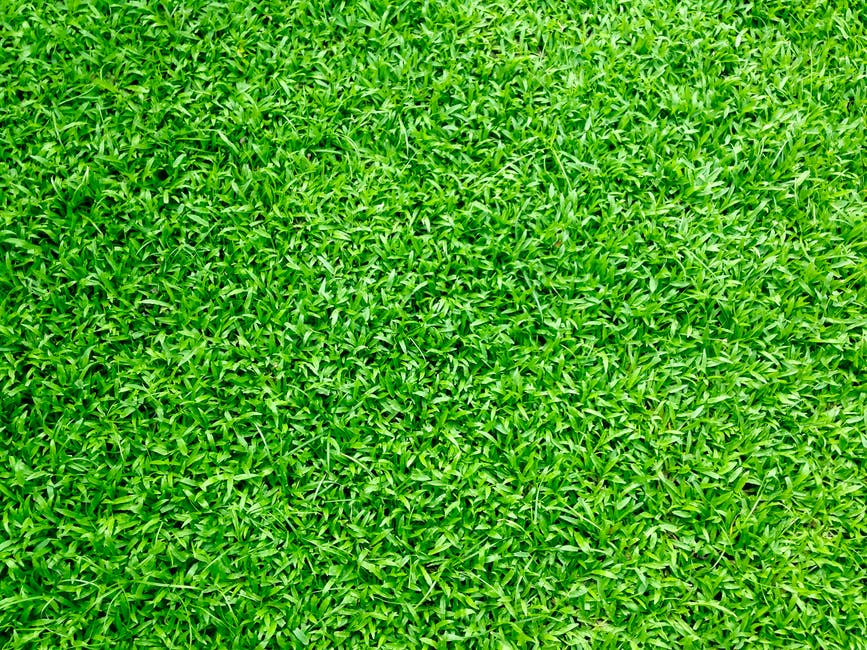 how much turf do i need