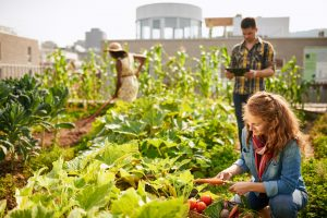 urban rooftop garden